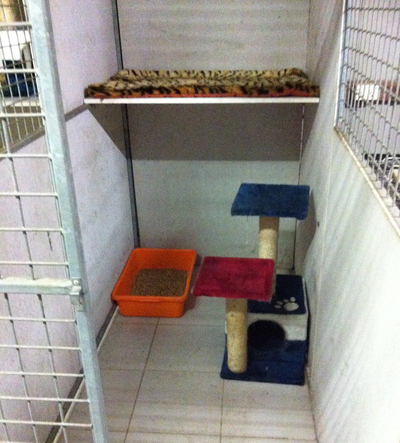 Gameford Pet Resort